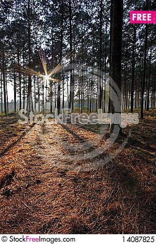 Free Sunrise Forest Royalty Free Stock Photo - 14087825