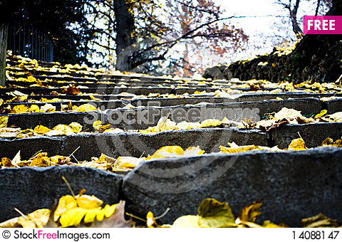 Free Stair In The Forest Royalty Free Stock Photography - 14088147