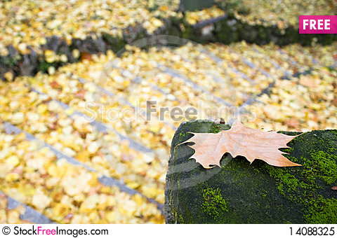 Free Stairs Of Leafs Royalty Free Stock Photo - 14088325
