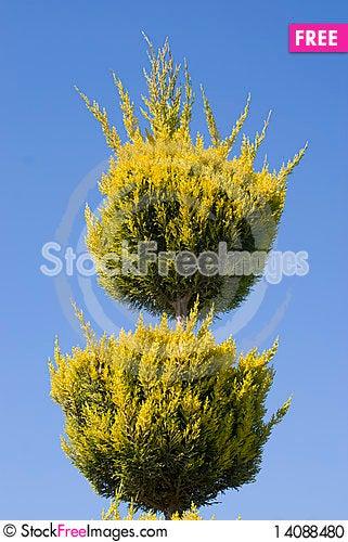 Free Cut Tree Stock Photo - 14088480