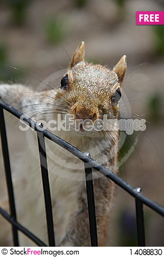 Free Squirrel In Central Park Stock Photo - 14088830