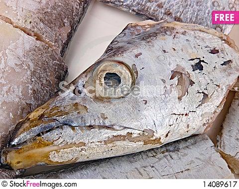 Free Fresh Conger Fish Royalty Free Stock Photography - 14089617