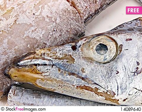 Free Fresh Conger Fish Stock Photo - 14089640