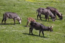 Free Herd Of Waterbucks Stock Images - 14080324