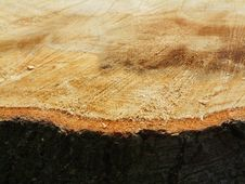 Free Tree Trunk Detail Stock Photography - 14081332