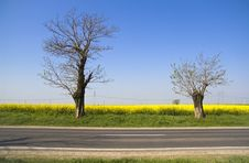 Free Landscape - Yellow Field And Two Trees Royalty Free Stock Images - 14081689