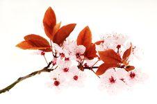 Free Spring Stock Photo - 14082560