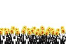 Free Daffodil Border Royalty Free Stock Photography - 14082837