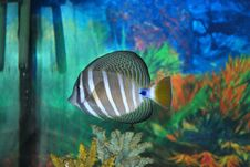Free Fish Stock Photos - 14085603