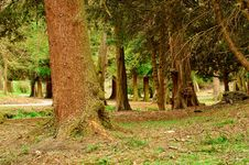 Free Park Trees Royalty Free Stock Photo - 14085895