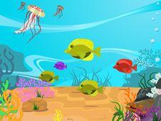 Free Underwater Life Stock Image - 14087821