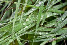 Free Rain Drops On Blades Of Grass Stock Photo - 14088140