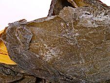 Free Dry Seaweed Stock Photos - 14089613