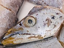 Fresh Conger Fish Royalty Free Stock Photography