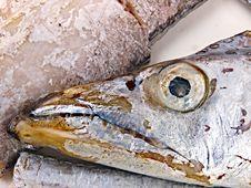 Fresh Conger Fish Stock Photo