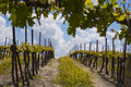 Free Grapes And Sky Royalty Free Stock Photo - 14091695
