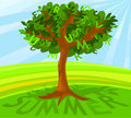 Free Summer Tree Royalty Free Stock Image - 14092606