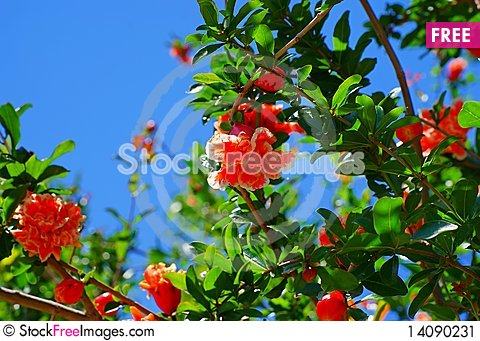 Free The  Flowers Stock Image - 14090231