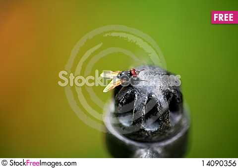 Free Fly Royalty Free Stock Image - 14090356