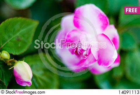 Free Purple Flower Stock Photos - 14091113