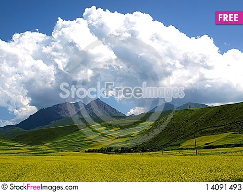 Free Rape In The Blue Sky And White Clouds Stock Photos - 14091493