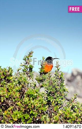 Free Bird Sitting On A Branch Stock Photo - 14091670