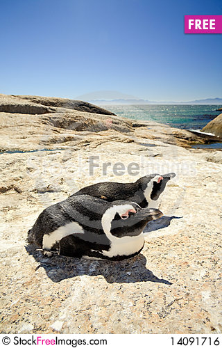 Free Two Penguins On A Rock Royalty Free Stock Image - 14091716