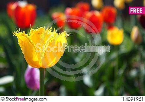 Free Flower Stock Image - 14091951