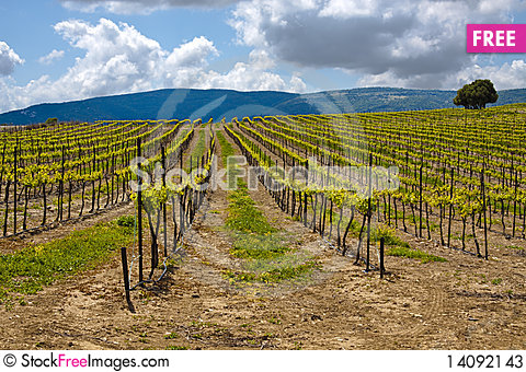 Free Wine Country Stock Photos - 14092143