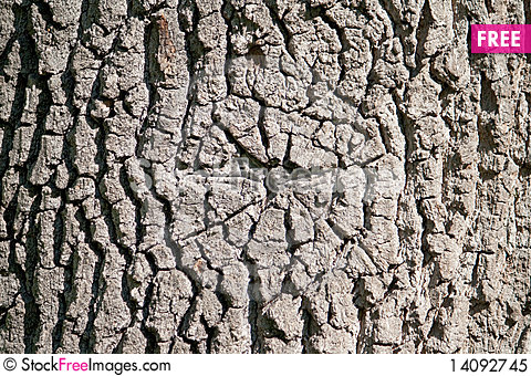 Free The Texture Of Oak Royalty Free Stock Photo - 14092745