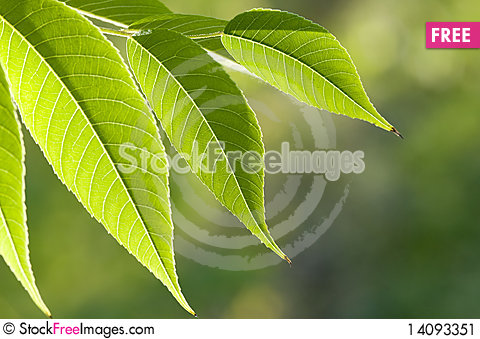 Free Green Leaves Stock Image - 14093351