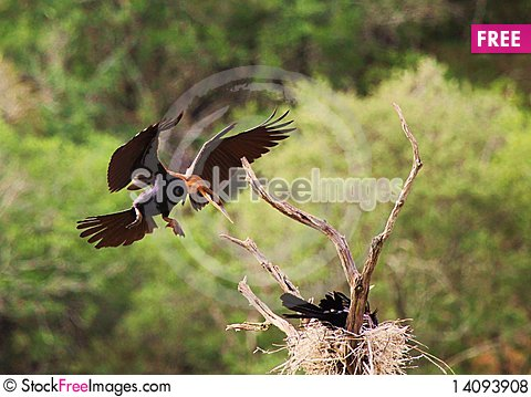 Free Nest Landing Royalty Free Stock Photos - 14093908