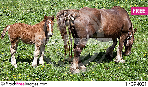 Free Baby Horse And Mother Stock Image - 14094031