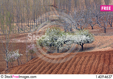 Free Trees And Fields Royalty Free Stock Photography - 14094637