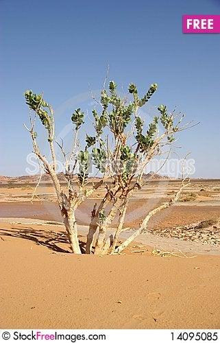 Free Tree In The Desert, Libya Royalty Free Stock Photo - 14095085