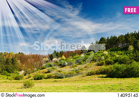 Free Wonderful Sunbeams And Exciting Blooming Trees. Royalty Free Stock Photo - 14095145