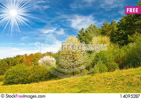 Free Beautiful Sun Above Spring Forest By Spring. Royalty Free Stock Photography - 14095287