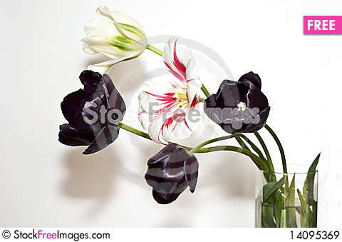 Free Tulips Blacks Royalty Free Stock Images - 14095369