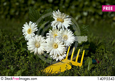 Free Flowers And Gardens 9 Stock Photos - 14095543