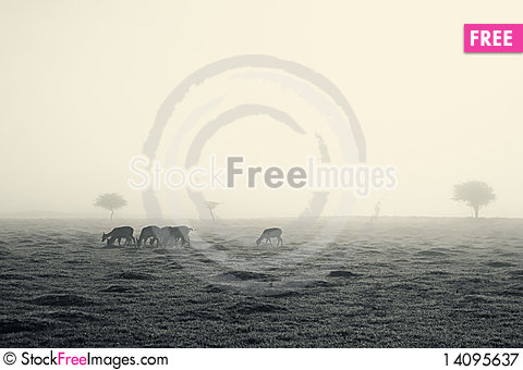 Free Deer On A Foggy Morning Royalty Free Stock Photography - 14095637