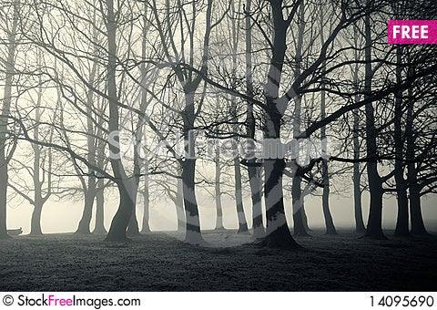 Free Spooky Wood Stock Photo - 14095690