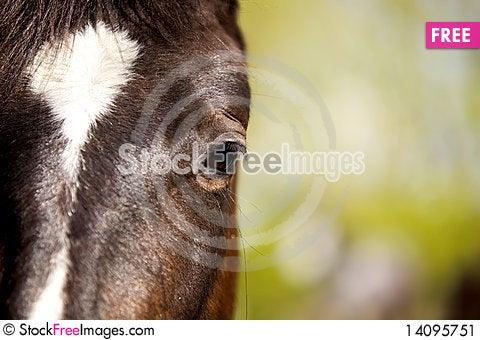 Free Closeup Of A Horse Eye Stock Image - 14095751
