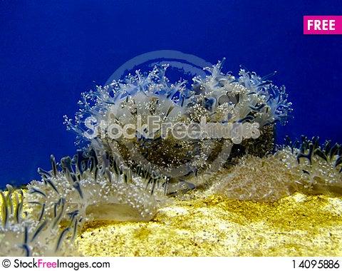 Free Marine Vegetation Royalty Free Stock Image - 14095886