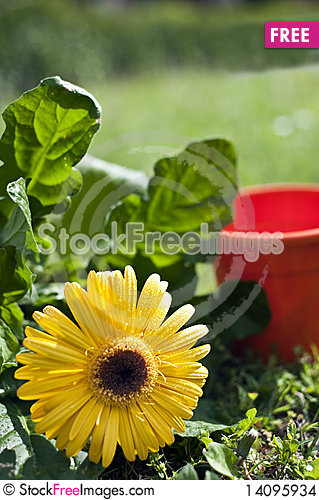 Free Flowers And Gardens Stock Images - 14095934