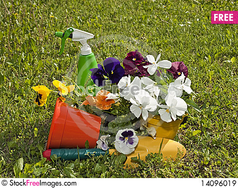 Free Flowers And Gardens Royalty Free Stock Images - 14096019