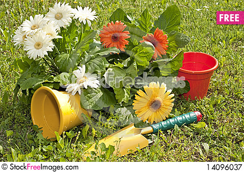 Free Flowers And Gardens Royalty Free Stock Photography - 14096037