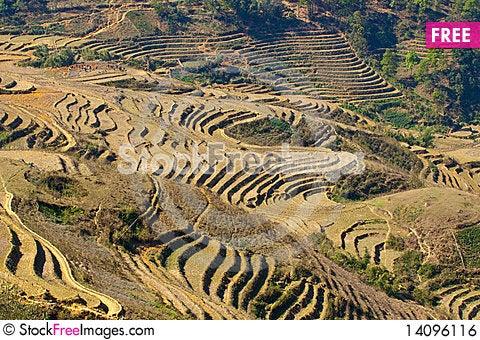 Free Stairways Rice Fields Royalty Free Stock Image - 14096116