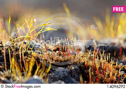 Free Moss Wakes Up Stock Photography - 14096292