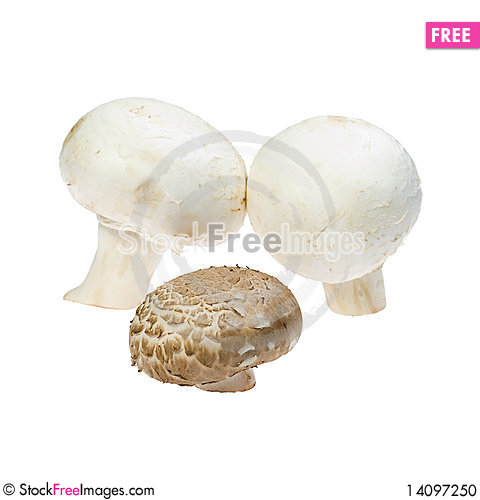 Free Three Mushrooms Stock Photo - 14097250