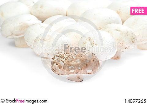 Free Mushroom Forest Royalty Free Stock Photo - 14097265